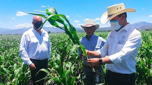 Agricultura Sustentable rebasa metas de 2019 en Michoacán