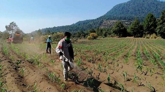 Valor del campo michoacano alcanza los 85 mil mdp: Sedrua