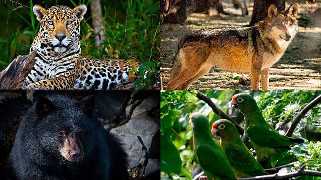 En el Día Mundial de los Animales: estos 10 están en peligro de extinción