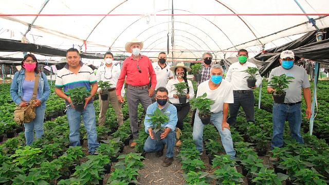 En Zitácuaro, concretan créditos a productores de flor de Nochebuena