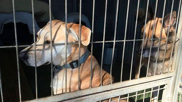 A pesar de pandemia, China continúa vendiendo carne de perro y gato