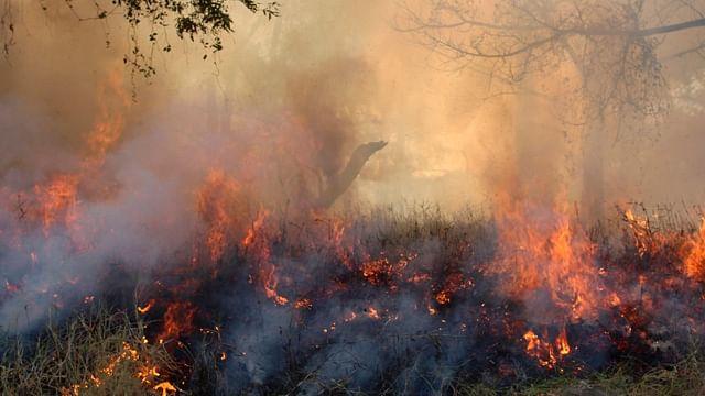 Incrementan incendios en Michoacán; 200% más que en el 2020