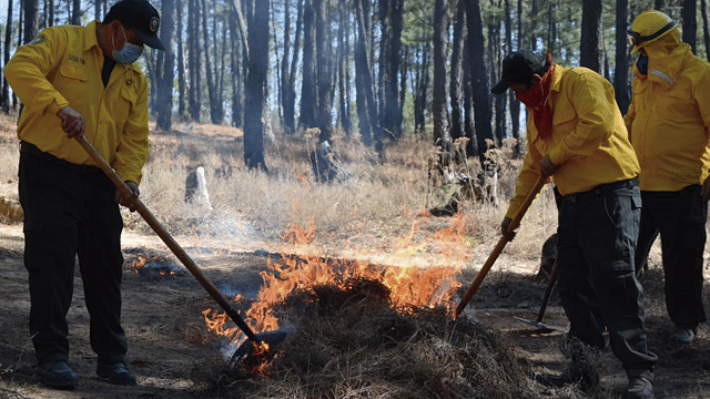 Inician jornadas de prevención contra incendios forestales, en Morelia