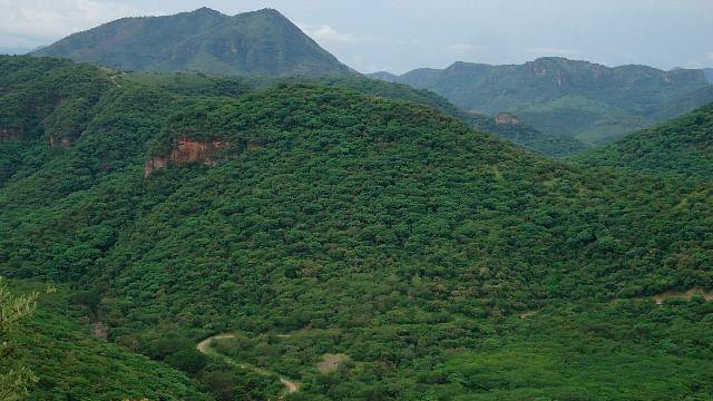 Michoacán, entre los más importantes de México en materia forestal