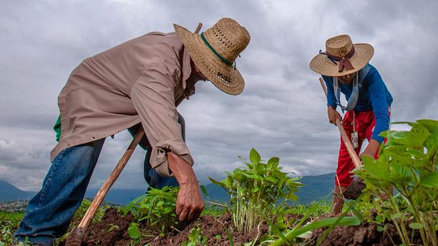 Canadá vacuna contra Covid-19 a campesinos mexicanos