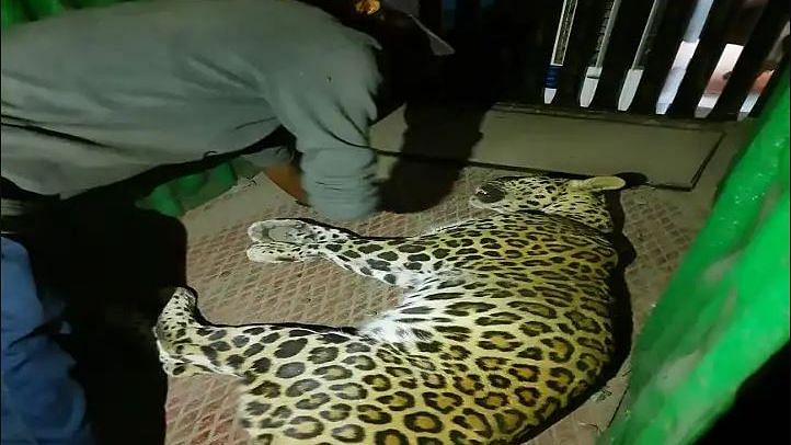 video woman barely survived an attack leopard goregaon mumbai incident CCTV footage