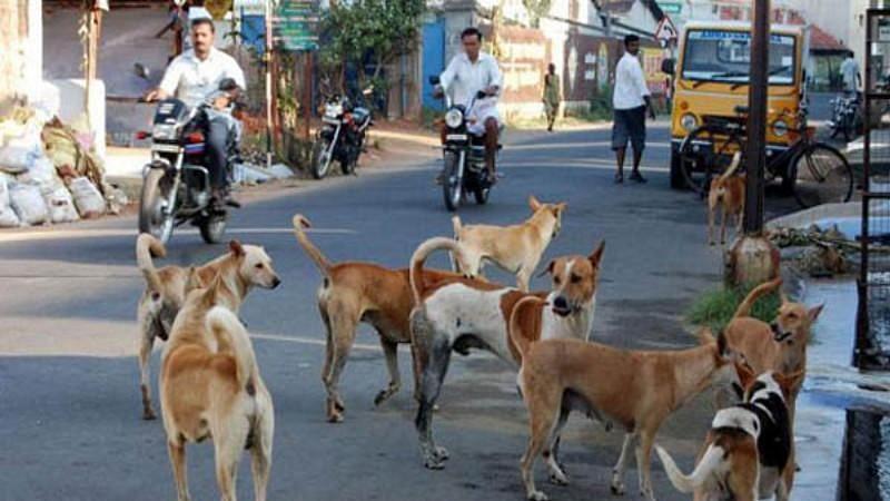 धक्कादायक! रत्नागिरी शहरात एका रात्रीत२१ कुत्र्यांचा संशयास्पद मृत्यू