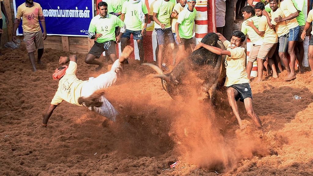 Who is the provocateur nudging the  bull factor in Tamil politics?