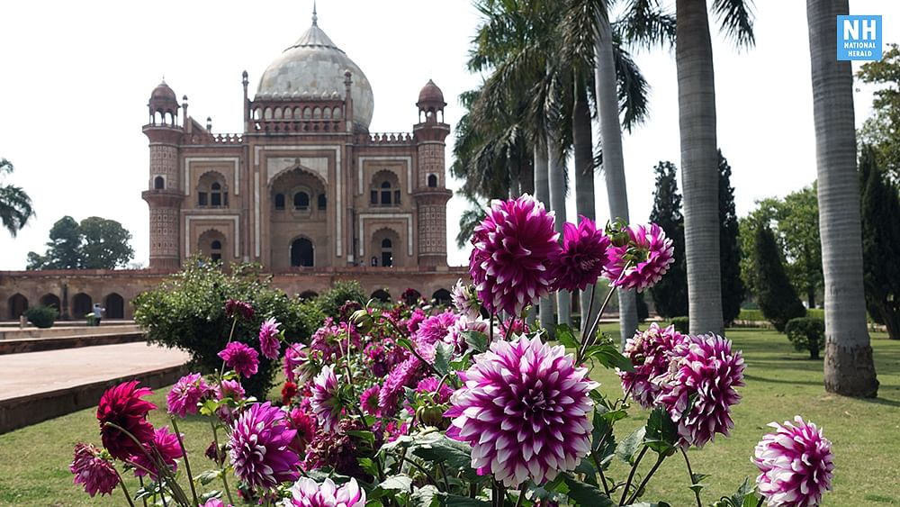 Images: Delhi decked in splendid colours of spring