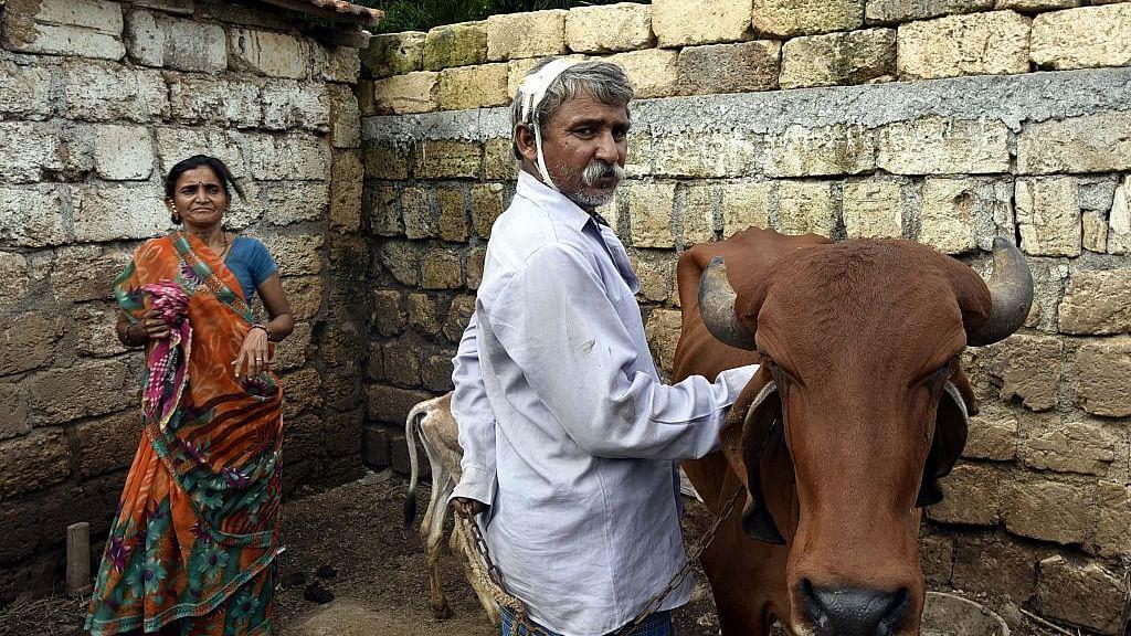 Ban 'Gau Rakshaks' deemed criminals by the PM, demands PIL