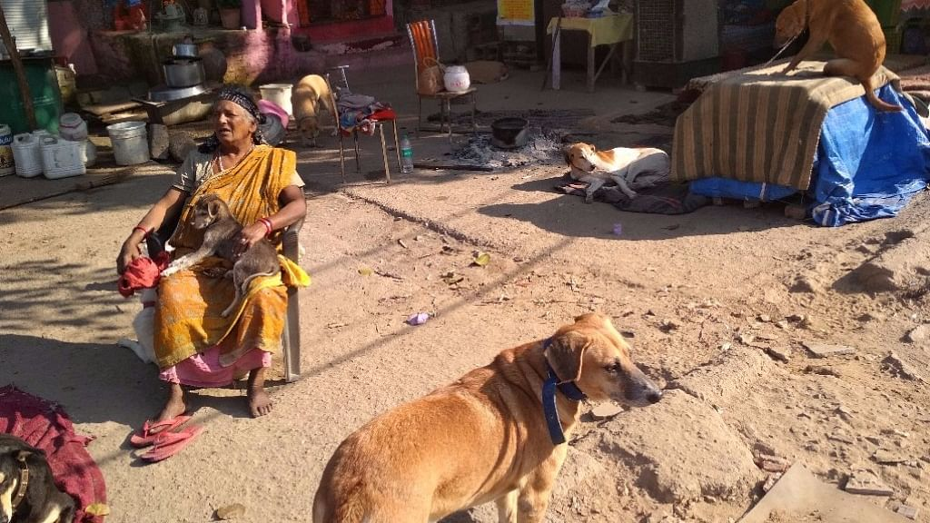 The mother of stray dogs