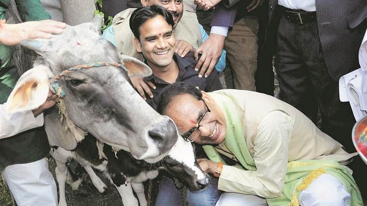 Abandoning cows could soon land you in jail in Madhya Pradesh