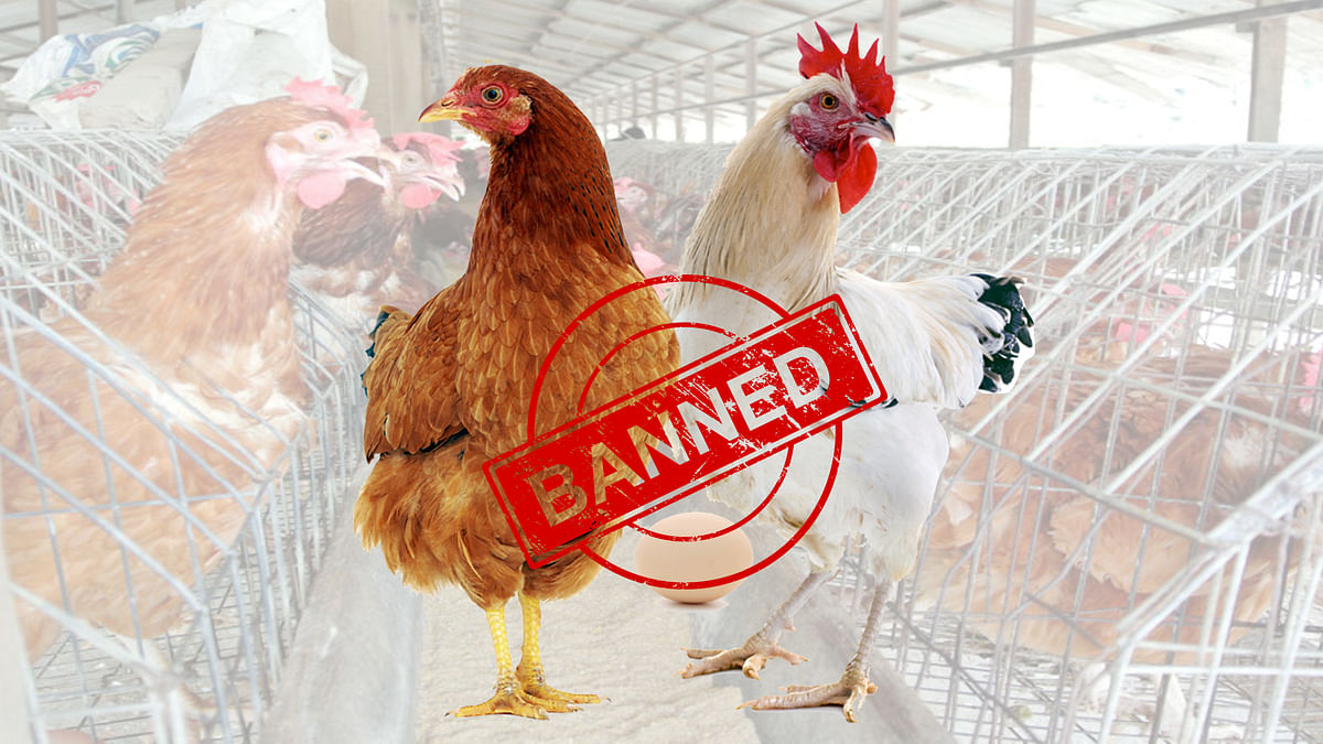Union cabinet approves ban on chicken