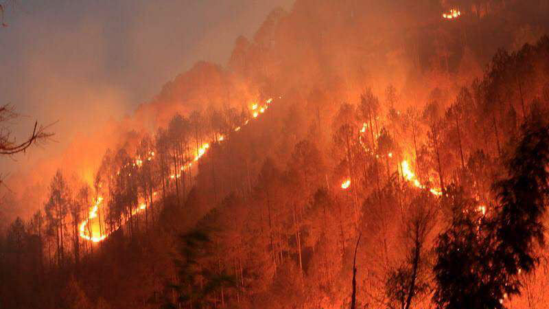 Helpless Uttarakhand CM leaves it to rain to put out ravaging forest fires