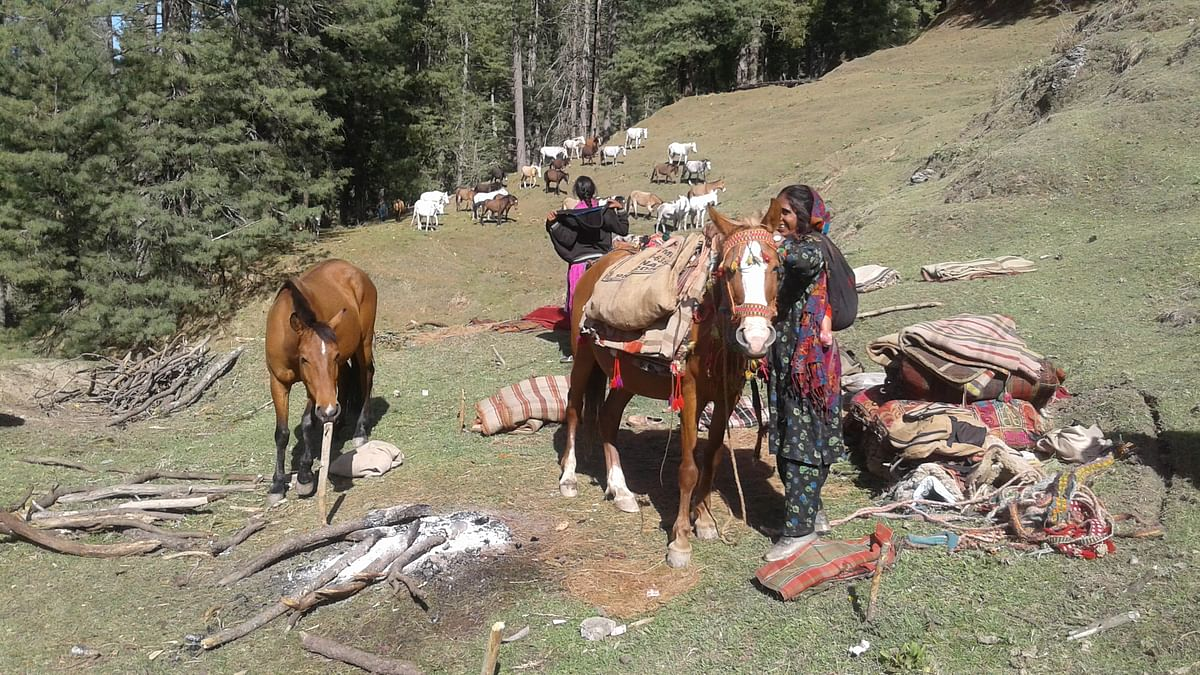 It's not the same anymore for Jammu & Kashmir nomads