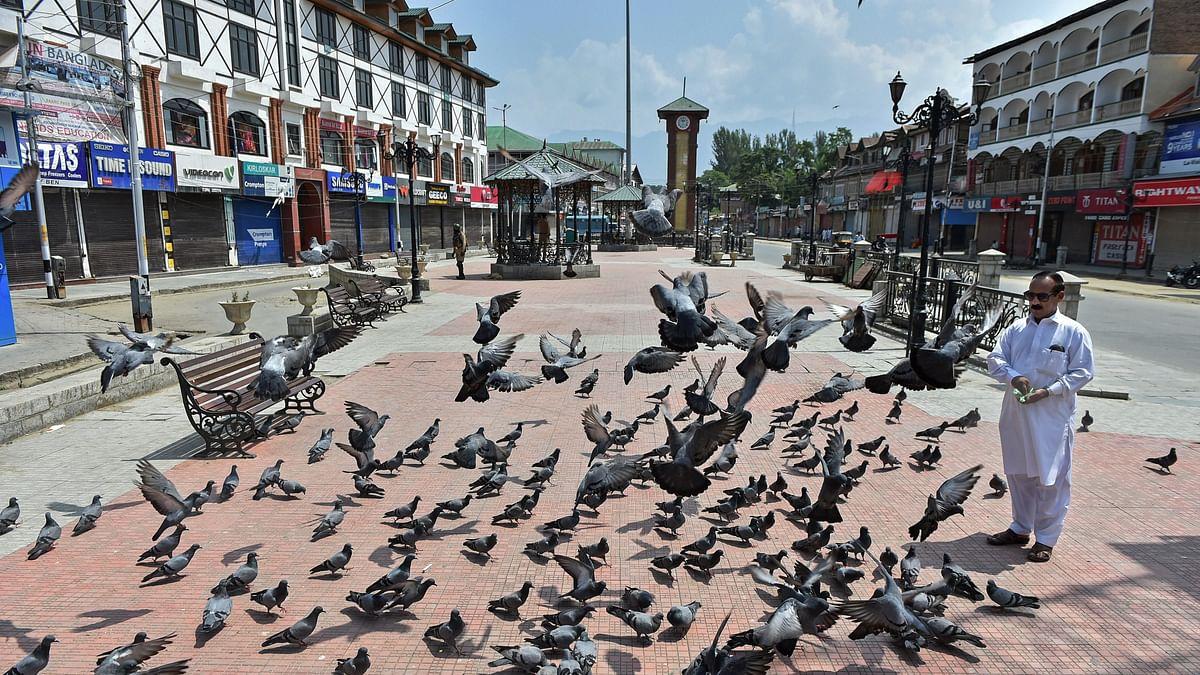190 pigeons found dead in Ahmedabad city; bird flu suspected