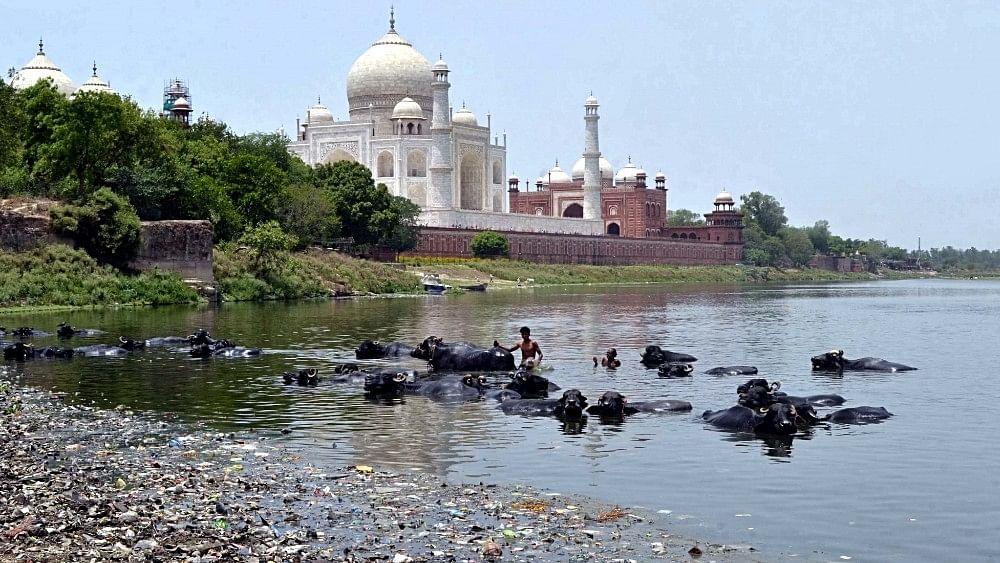 Yamuna pollution: Cycle yatra from Agra's Taj to Delhi's India Gate