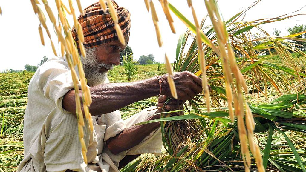 Paddy crops affected by heavy rains in Punjab, Haryana and Chandigarh