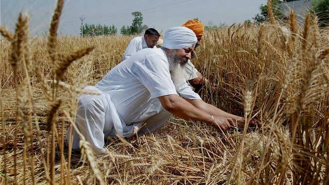 Climate crisis will have serious impact on food production, says study