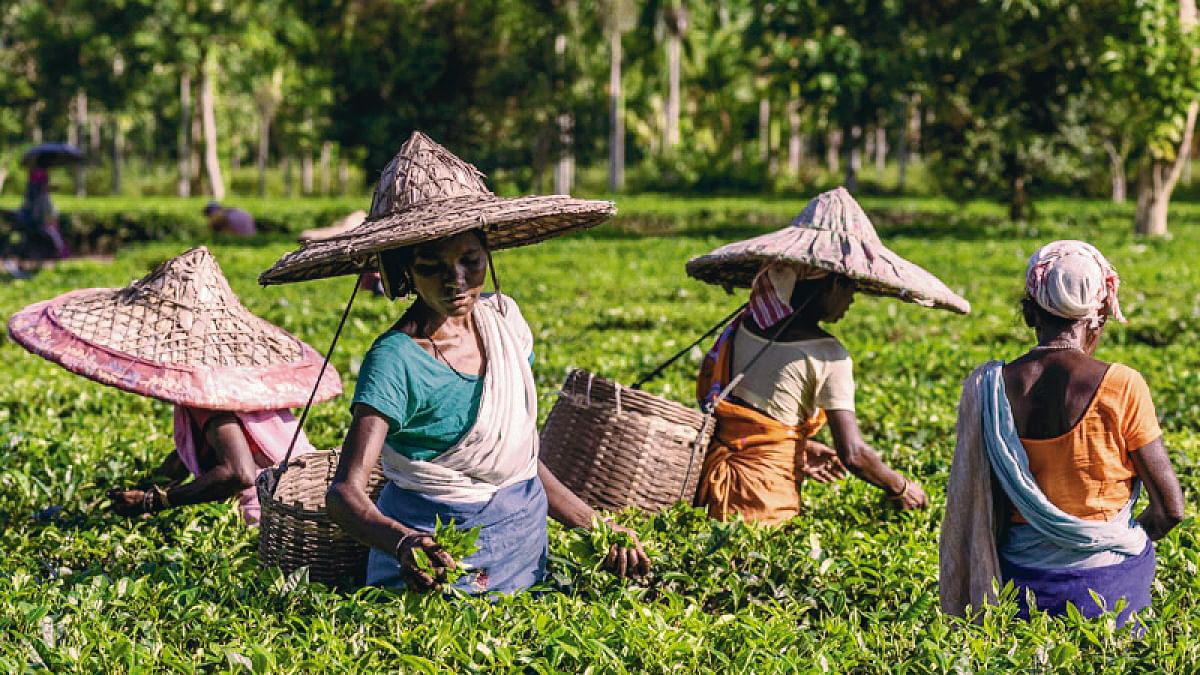 A glimpse into lives of Adivasi tea plantation workers