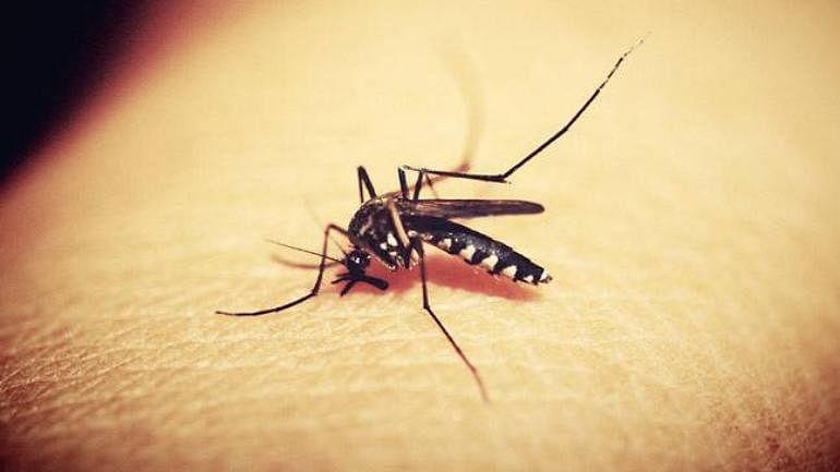 Rajasthan: 29 confirmed cases of Zika virus in Jaipur