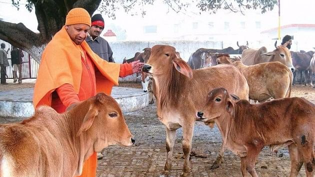 Geo-tagging of cattle: Another innovative step by Yogi government