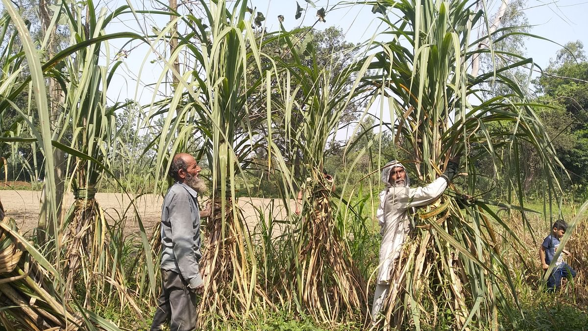 Western Uttar Pradesh farmers on interim budget: We asked for relief not bribe