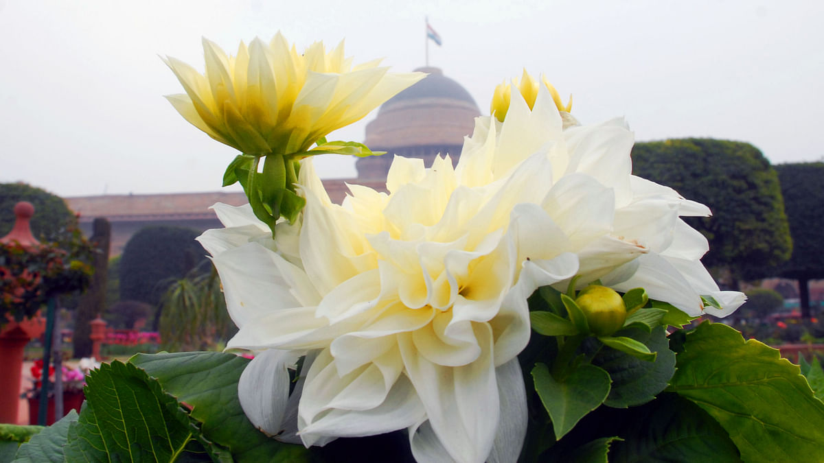 Mughal Gardens open for public from February 6: flowers in pictures