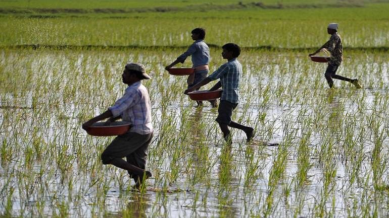 Telangana: Over 200 farmers file nominations in Nizamabad Lok Sabha seat