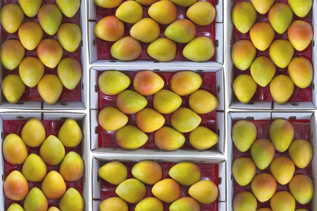 An ode to the mango