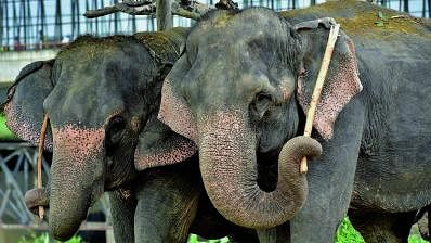 Guwahati High Court to hear petition objecting to shifting elephants to Gujarat