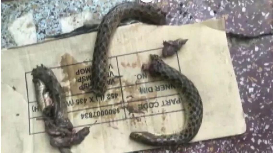 Drunk UP man bites a snake to death, lands in hospital