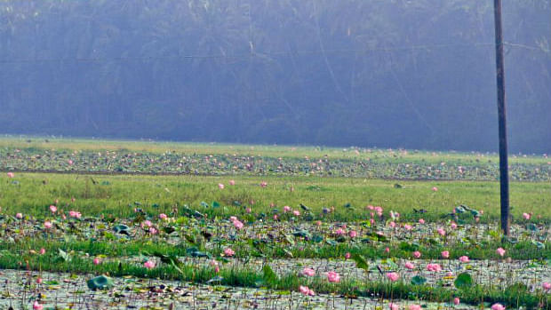 Muslim village that grows lotus for temples, supplied them for PM Modi's function