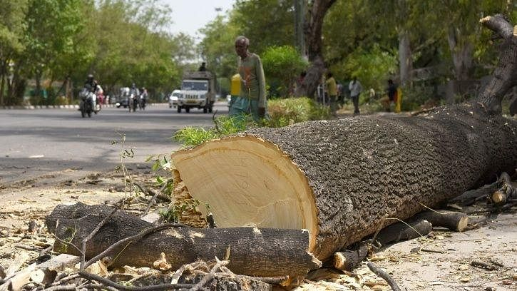 Modi govt cuts down more than 1 crore trees in 5 years for 'development', plans to fell more