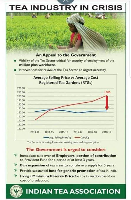 Tea industry in crisis with rising cost, stagnant price, Plantation Association seeks ban on  areas expansion