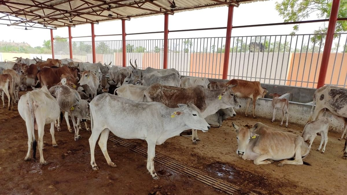 Upset farmers lock 200 cows in UP school