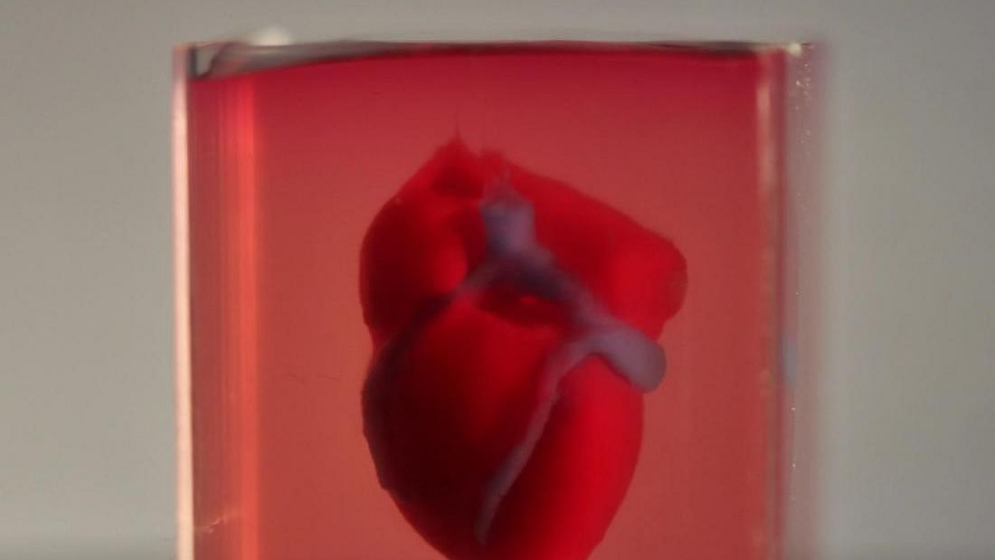 Scientists a step closer to print 3D  full-sized adult human heart