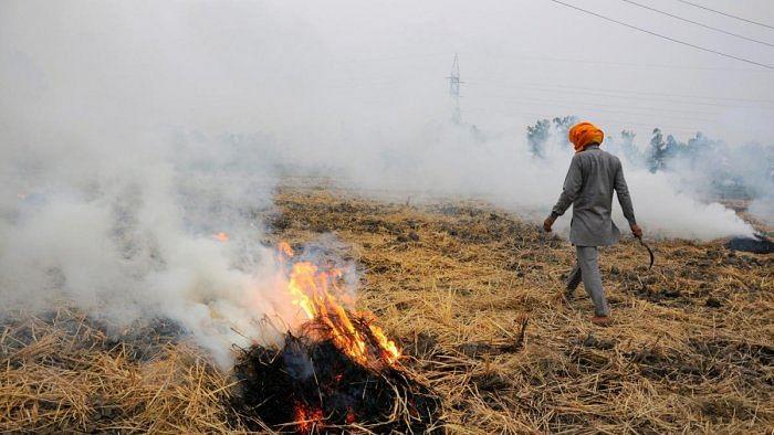 Punjab seeks  ₹100 per quintal paddy to check stubble burning