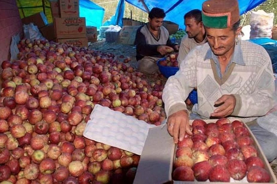 Climate change leaves Himachal apple economy in hostile weather