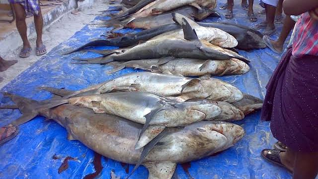 Shark market in Kerala