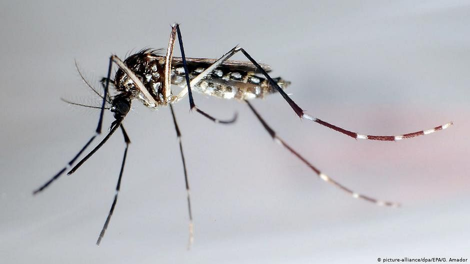 Season of two viruses? Scientists worried that dengue outbreak may aggravate COVID-19 crisis
