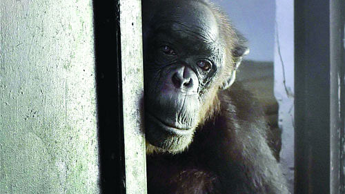 ED attaches chimpanzees, marmosets under PMLA!
