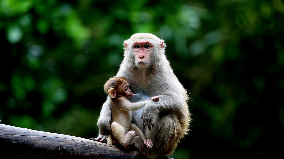 Tension in UP district after monkey shot dead