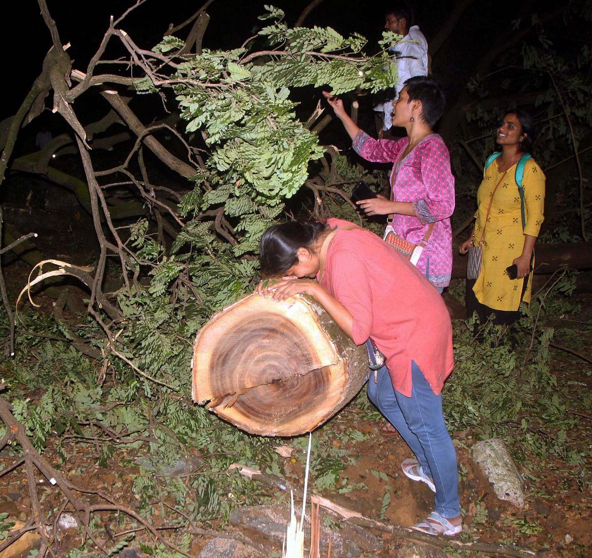At Mumbai's Aarey Colony, trees butchered @1/minute