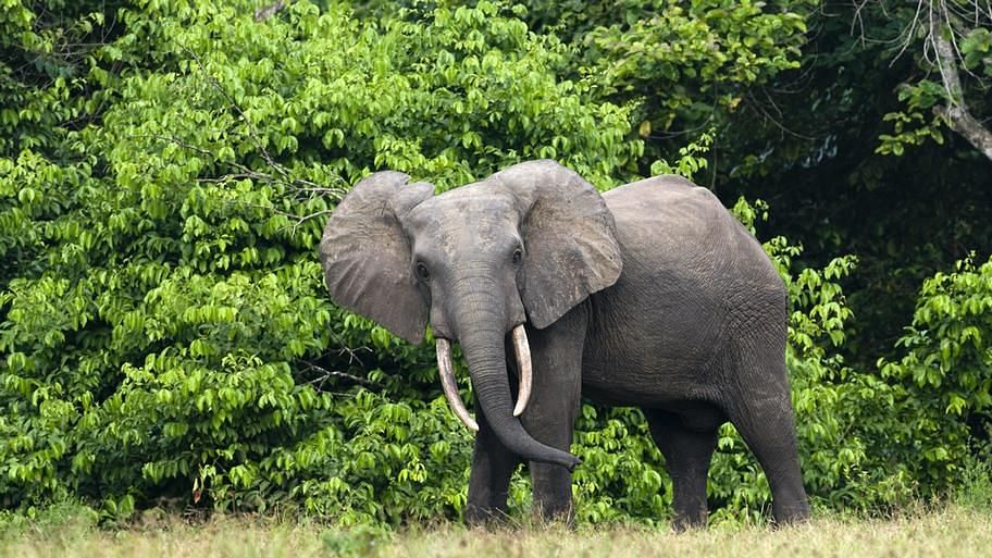 Elephants dying of hunger, thirst in drought-hit Zimbabwe