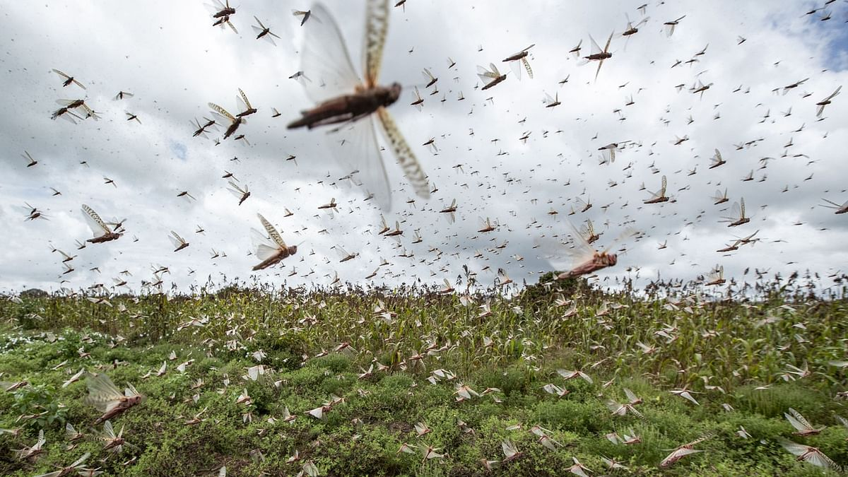 'India facing twin invasion of locusts, but ready for it'