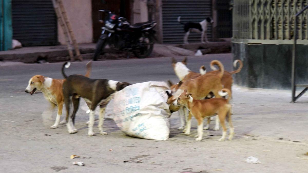 Uttar Pradesh: People abandoning pets due to coronavirus fear