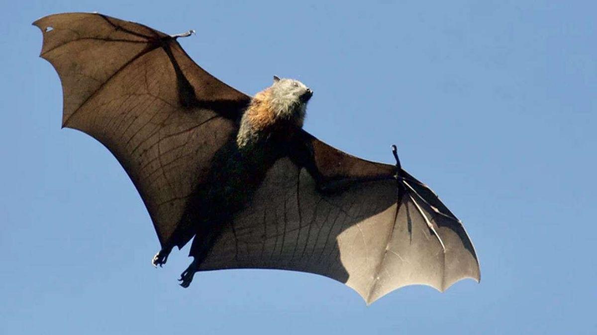 Coronavirus in bats affecting humans is rare: ICMR