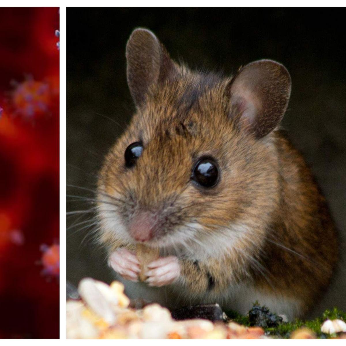Potential vaccine for COVID-19 generates immunity in mice: Study