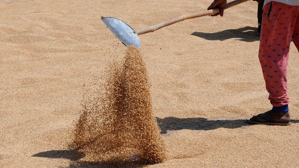 Punjab procures 100 lakh metric tonne wheat amid pandemic